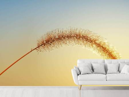 Photo Wallpaper Ornamental grass in XXL