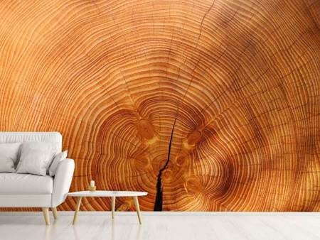 Photo Wallpaper tree rings