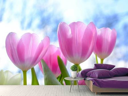 Photo Wallpaper Tulips in nature