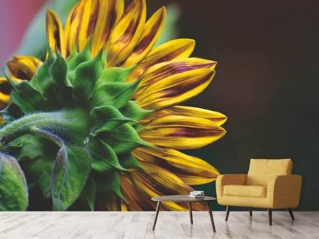 Photo Wallpaper Sunflower Close up
