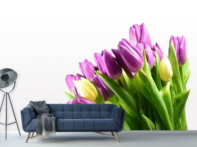 Photo Wallpaper Tulips in XL