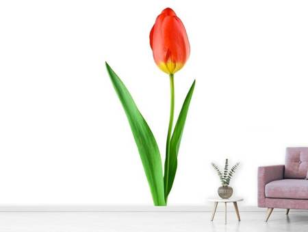 Photo Wallpaper The proud tulip