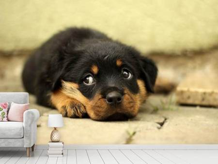Photo Wallpaper Sweet Rottweiler puppy