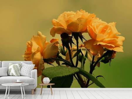 Photo Wallpaper The roses in nature