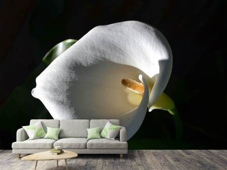 Photo Wallpaper Wonderful calla