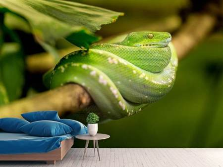 Photo Wallpaper Green snake