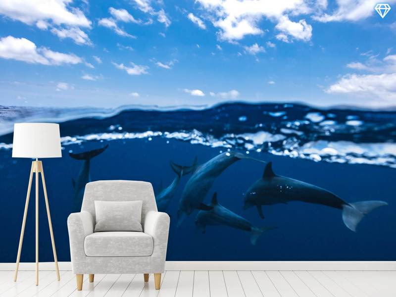 Photo Wallpaper Between Air And Water With The Dolphins