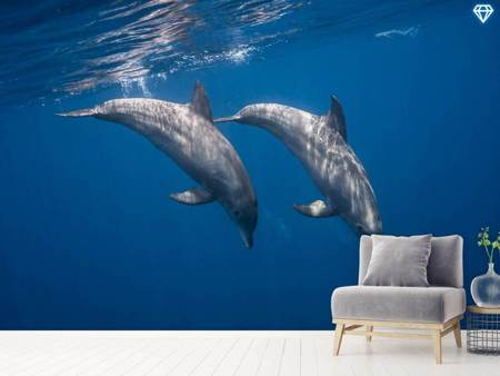 Photo Wallpaper Two Bottlenose Dolphins
