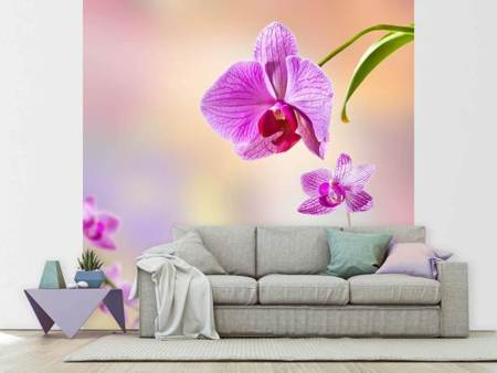 Photo Wallpaper Romantic Orchids