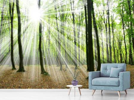 Photo Wallpaper Magic Light In The Trees