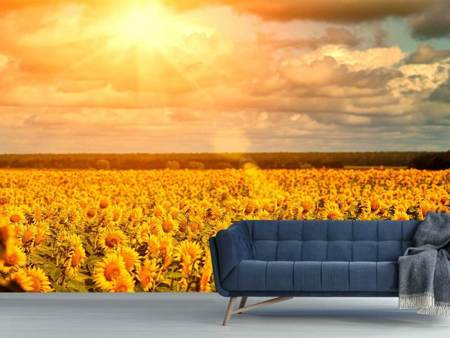Photo Wallpaper Golden Light Sunflower